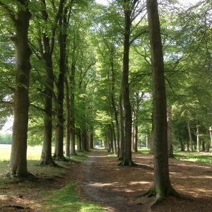 Gratis coachwandeling van 3 kwartier tijdens de Nationale Wandelcoachdag @ Landgoed Broekhuizen | Leersum | Utrecht | Nederland